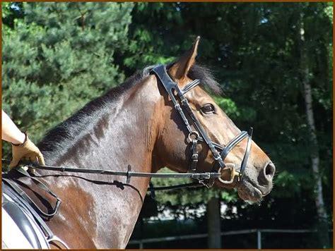 Für Welche by Welche Farbe F 195 188 R Sattel Und Trense Forum Pferd De
