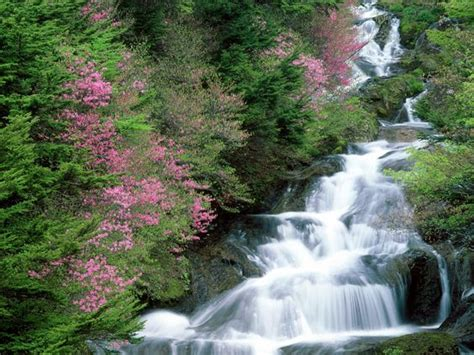 beautiful waterfalls with flowers images of waterfalls and flowers beautiful amazing waterfall flowers from japan hd wallpapers