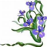Iris Clipart Illustrations. 1,872 iris clip art vector EPS drawings ...