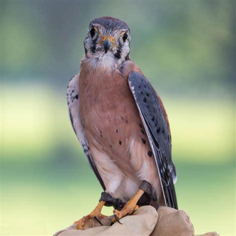 wild birds unlimited ames 17th anniversary raptor