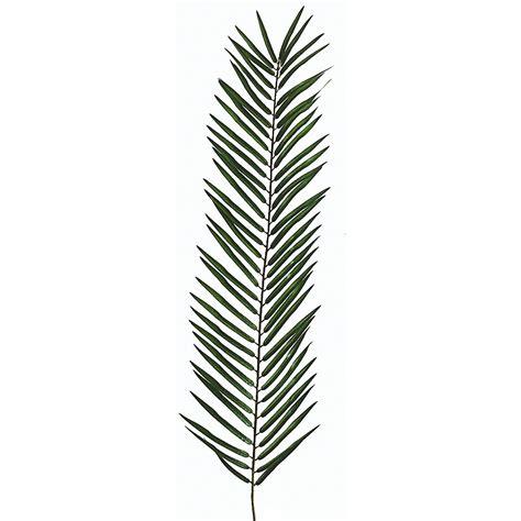 Areca Palm deco hoja de palmera areca decorativa longitud 90 cm