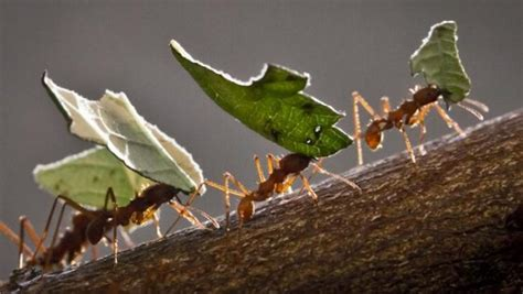 eliminare le formiche da casa come eliminare le formiche da casa i metodi naturali