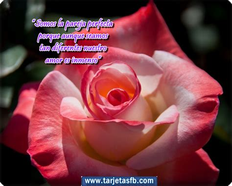 imagenes de rosas con frases imagenes de rosas con frases auto design tech