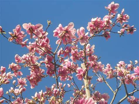 fiore simbolo di speranza preludio di primavera dear miss fletcher