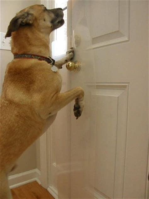 How To Stop Cat From Scratching Door by 10 Images About Coupons Clawguard Stories On