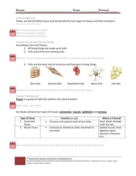 Tissue Worksheet Answers by Cell Tissue Handout