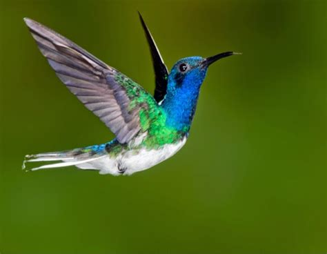 hummingbirds can fly backwards one minute science