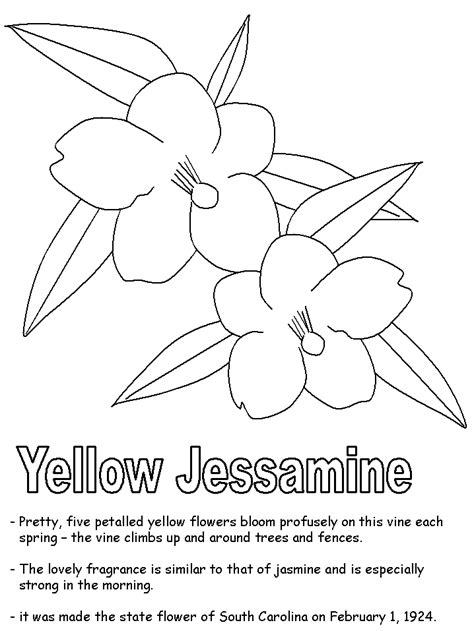 Yellow Jessamine Coloring Page | yellow jessamine coloring pages