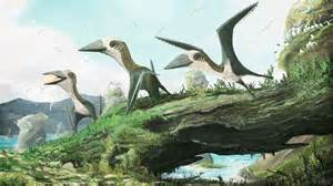 cat size flying reptile shakes up pterosaur family tree