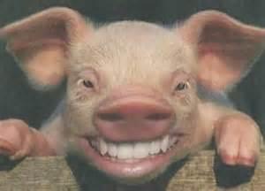 grappige dierenfoto s foto s en afbeeldingen chaimaxxx jouwweb nl