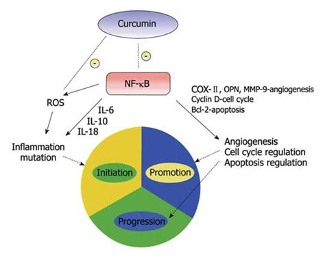 j dietary supplements impact factor preventing colorectal cancer naturally