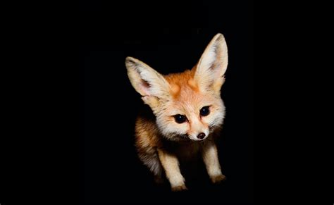 imagenes animales nocturnos los animales nocturnos m 225 s tiernos del mundo