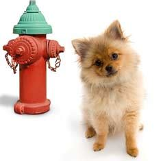 at what age should a puppy be potty trained intensive potty program lancaster pa potty relapse puppy foolproof