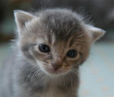 imagenes de gatitos llorando comment faire pour que mon b 233 b 233 chat arr 234 te de pleurer