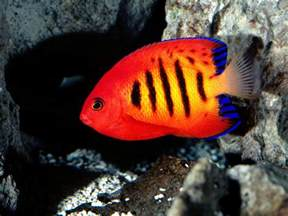 fish colors best wallpapers colorful fish wallpapers