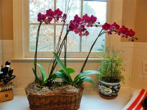 top 28 taking care of orchids pin by kayla bannon roberts on garden pinterest all about