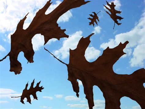 download wallpaper daun jatuh daun yang jatuh tak pernah membenci angin jika dan hanya
