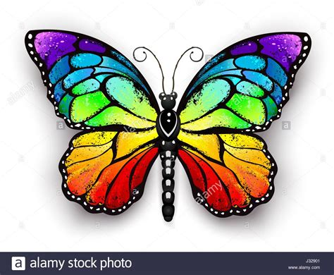 butterfly colors realistic monarch butterfly in all the colors of the