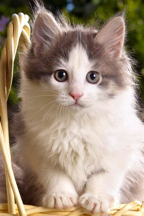 cute cat wallpapers  iphone wallpaper ipod touch