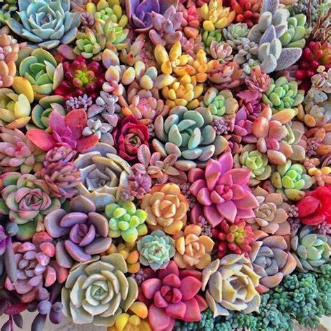 colorful succulents 美しい the variety of colors shapes and textures is why i
