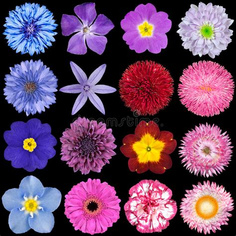 different reds various red pink blue and purple flowers stock photo