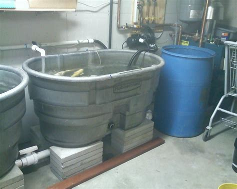 100 gallon fish tank on second floor two 100 gallon tanks gravity feed to barrel