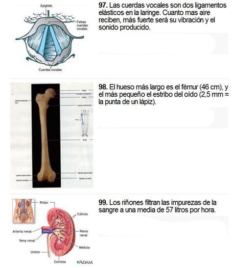 curiosidades del cuerpo humano megapost taringa mas de 100 curiosidades del cuerpo humano ciencia y