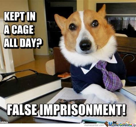 Dog Lawyer Meme - lawyer memes best collection of funny lawyer pictures