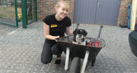 In Essex With Dogs thank you from dogs trust basildon dogs trust