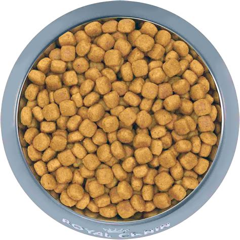 royal canin golden retriever puppy food royal canin golden retriever puppy food 30 lb bag chewy