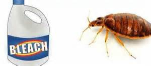 will lysol kill bed bugs kill bed bugs archives health guide