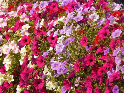 Kembang Warna Warni warna warni bunga tanaman hias indah 30 slideshow jenis2 kembang