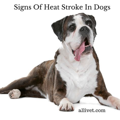 signs of stroke in dogs signs of a stroke in a
