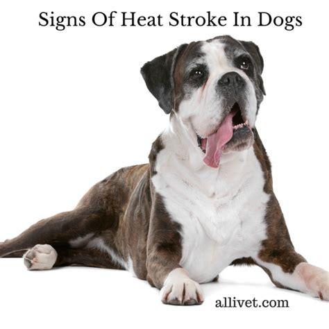 signs of heat stroke in dogs heat stroke in dogs allivet pet care