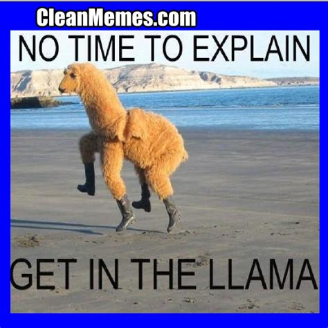 Funny Llama Memes - pin llama memes best collection of funny pictures on pinterest