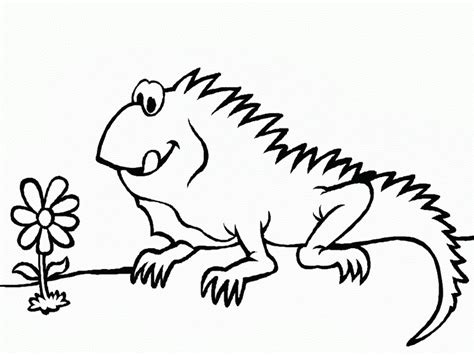 letter i is for iguana coloring page free printable free printable iguana coloring pages for kids