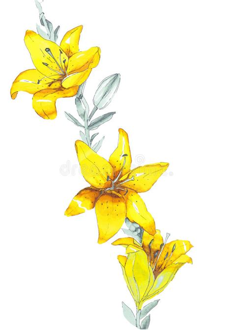yellow lily pattern sketch lily yellow flowers stock illustration