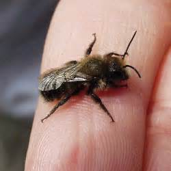 organic pest control buying beneficial bugs