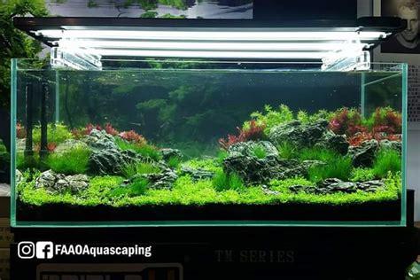 live aquascaping cips exhibition guangzhou aquajaya - Aquascape Exhibition