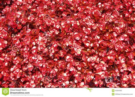 new year flower texture flower bed texture stock photo image of seasonal