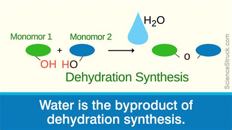 dehydration reaction dehydration synthesis