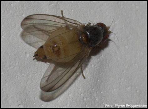 Ameisen Im Blumenkasten Bekämpfen by Kleine Fliegen Seltsame Kleine Fliegen In Der Wohnung