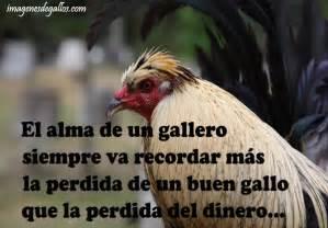 gallos con frases imagenes de gallos finos con frases de un gallero