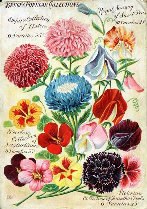 250 Best Images About Botanical Illustrations On Pinterest Missouri Botanical Garden Library