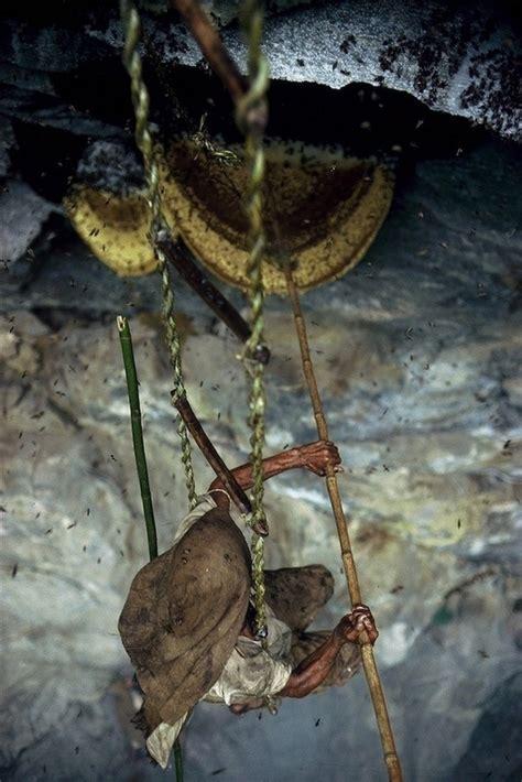 honey hunt nepal s honey hunters on himalayan cliff epidemicfun