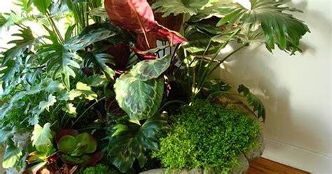 merawat tanaman  aneka tanaman hias bagaimana