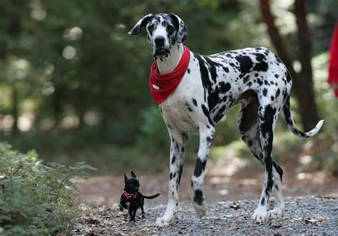 worlds dogs worlds