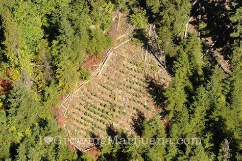 in door plants pot three four plants argements marijuana aerial observation
