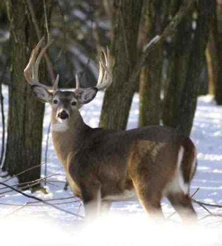 pattern whitetail deer patterning whitetail bucks