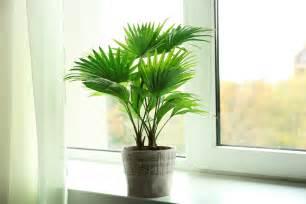 pflegeleichte pflanzen garten pflegeleichte pflanzen f 252 r die ihr keinen gr 252 nen daumen
